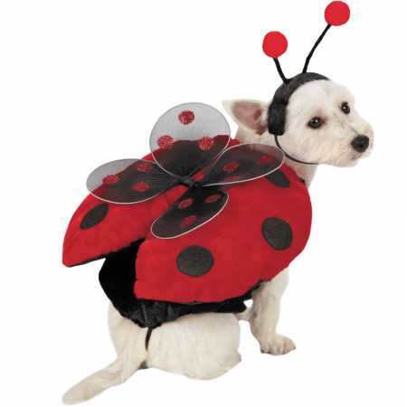 Ladybug with Wings Dog Costume  SMALL