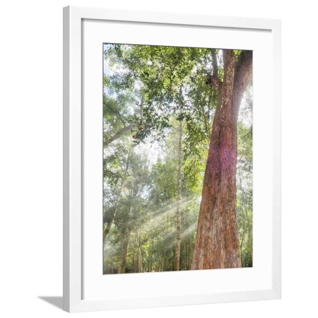 - Asia, Cambodia, Angkor Watt, Siem Reap, Fog with sunrays in the trees Framed Print Wall Art By Terry Eggers