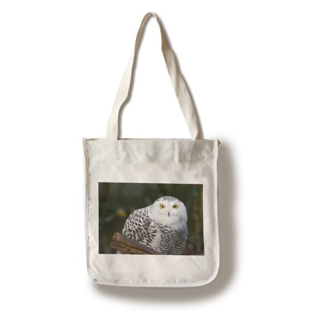 Snowy Owl - Lantern Press Photography (100% Cotton Tote Bag - Reusable) - Owl Tote