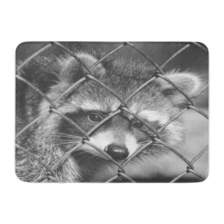 Black Matt - SIDONKU Raccoon in Cage Black and White Matt Tone Brazil Doormat Floor Rug Bath Mat 30x18 inch