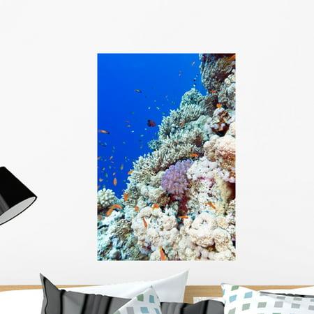 Colorful Coral Reef Tropical Wall Mural Decal Sticker Wallmonkeys Peel