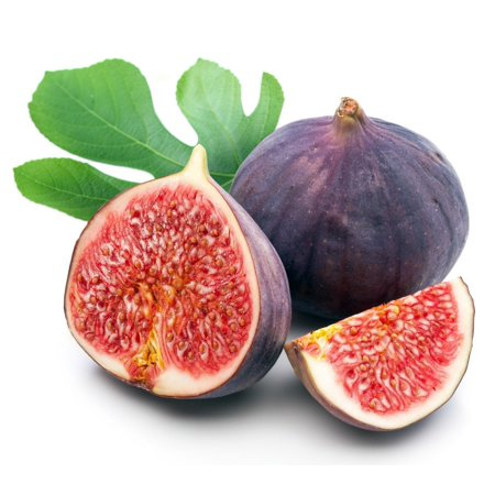 - Chicago Edible Fig Plant - Ficus - Hardy - 2.5