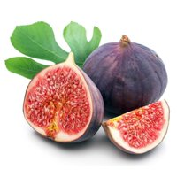 """Chicago Edible Fig Plant - Ficus - Hardy - 2.5"""" Pot - The Hardiest Fig"""