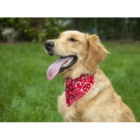 - lucybelle pets lucybelle cotton and nylon bandana dog collar