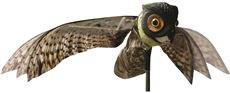Bird X Prowler Owl