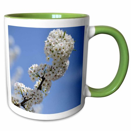 3dRose Beautiful Branch of Flowers in a Blue Sky- Spring Photography - Two Tone Green Mug,