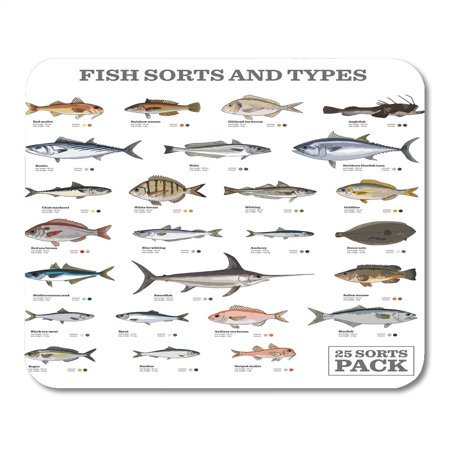 KDAGR Red Hake Twenty Five Different Fish Sorts and Types Colored Blue Info Sole Mousepad Mouse Pad Mouse Mat 9x10 inch