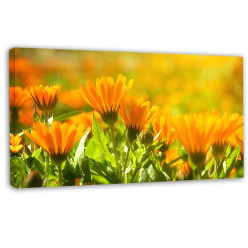Design Art 'Orange Marigold Flowers in Sunlight' Photographic Print on Wrapped Canvas
