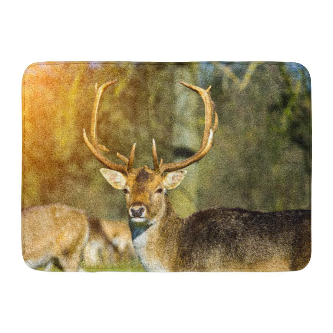 GODPOK Antler White Trophy Whitetail Deer Buck Close Up