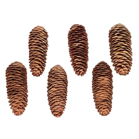 6 x Natural Large Long Pine Cones for Craft & Decoration +Carabiner Y