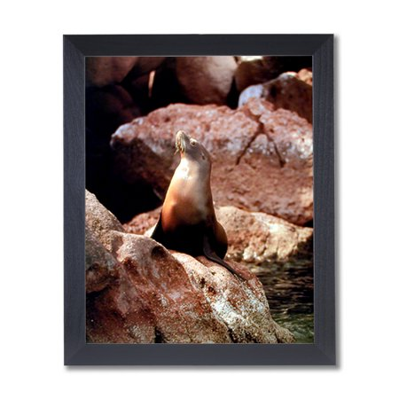Sea Lion Sun Bathing On Rocks Outdoor Wall Picture Black Framed Art Print