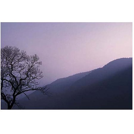 Trademark Art Purple Hours Canvas Art by Philippe Sainte-Laudy