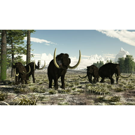 Woolly Mammoths In The Prehistoric Northern Hemisphere Canvas Art   Arthur Doretystocktrek Images  19 X 11