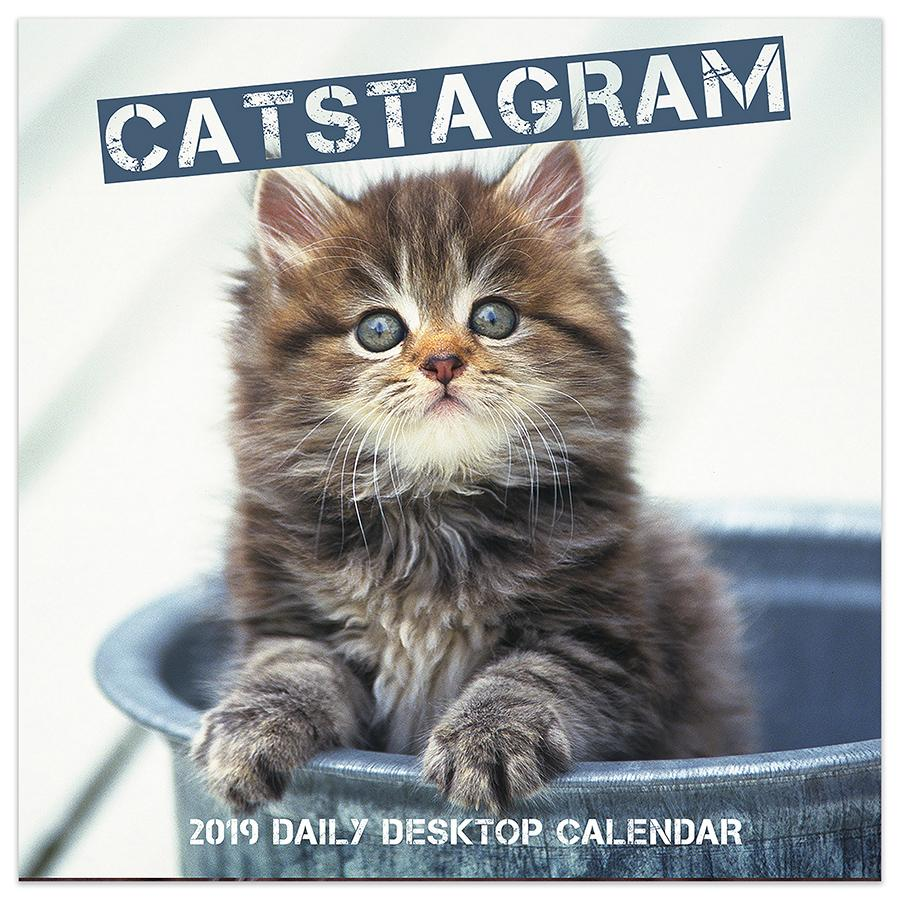 "2019 Catstagram 5.5"" x 5.5"" January 2019-December 2019 Daily Desktop Calendar by TF Publishing"
