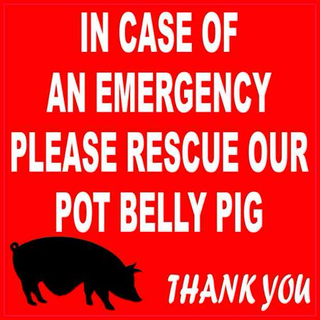 Emergency Rescue Decal (4x4 In Case Of An Emergency Please Rescue Our Pot Belly Pig Sticker Decal Sign )