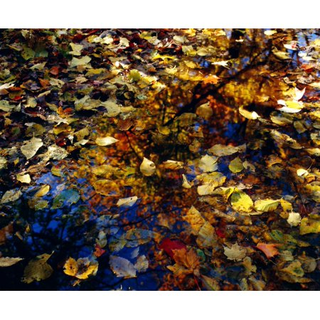 Leaves In Water Puddle PosterPrint