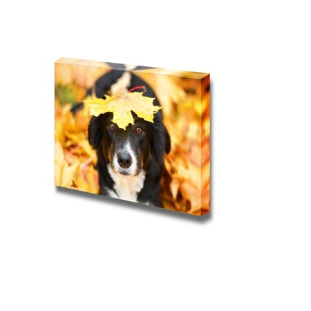 Cute Black Border Collie Dog with a Maple Leaf on the Head Beautiful Autumn View - Canvas Art Wall Decor - 16
