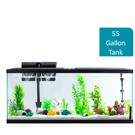 Aqua Culture 55-Gallon Aquarium Starter Kit With - All Glass Fish Tank