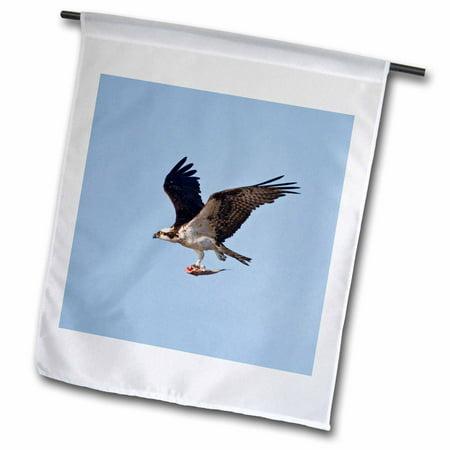 3dRose Osprey bird in flight with fish, Texas, USA - US44 LDI0675 - Larry Ditto - Garden Flag, 12 by 18-inch](Larry Bird Wig)