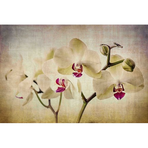 "Marmont Hill ""Pale Orchids Wide"" by Malek Painting Print on Wrapped Canvas"