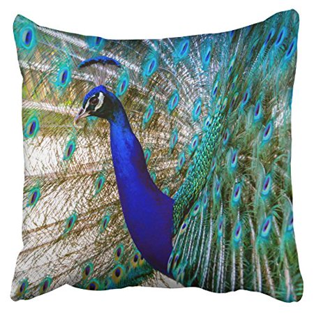 WinHome Pillowcases Beautiful Cobalt Blue Turquoise Peacock Decorative Throw Pillow Covers Protectors Cases Cushion Cover Case Couch Sofa Size 18x18 inches One Side print