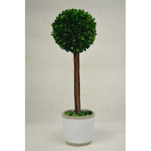 GT DIRECT CORP Ball Boxwood Topiary in Planter