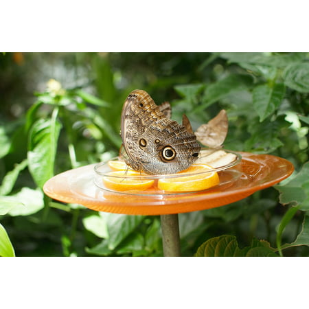 LAMINATED POSTER Botanical Garden Garden Nature Summer Butterfly Poster Print 24 x 36 (Botanical Gardens Brooklyn Halloween)