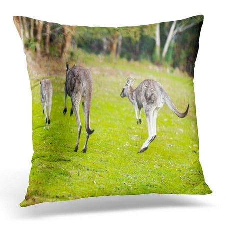 ECCOT Grampians Brown Kangaroo Kangaloo Jumping Green Wallaby Adventure Pillowcase Pillow Cover Cushion Case 16x16 inch