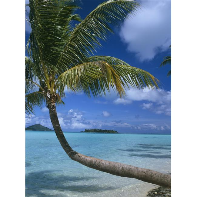 Posterazzi DPI1889456LARGE Palm Tree Leaning Over Sea Poster Print, 26 x 36 - Large - image 1 of 1