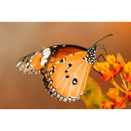 LAMINATED POSTER Nature Insect Plant Orange Flower Green Butterfly Poster Print 24 x 36