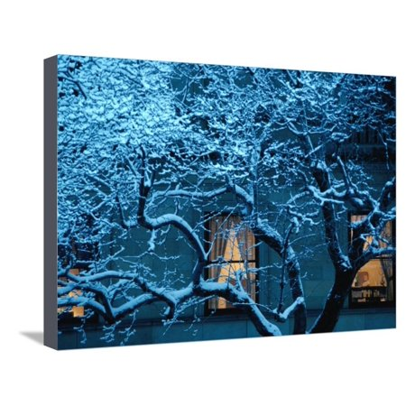 Buildings on Commonwealth Avenue in Back Bay Area, Boston, Massachusetts, USA Stretched Canvas Print Wall Art By Lou Jones Boston Back Bay Area