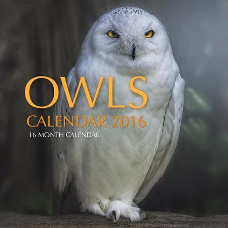 Owls Calendar 2016: 16 Month Calendar (Paperback)
