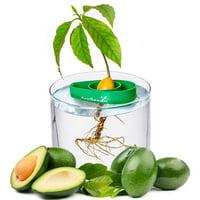 AvoSeedo Bowl - Grow your own Avocado Tree - Green