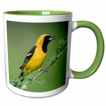3dRose Hooded Oriole bird, Rio Grande Valley, Texas - NA02 RNU0166 - Rolf Nussbaumer - Two Tone Green Mug, 11-ounce