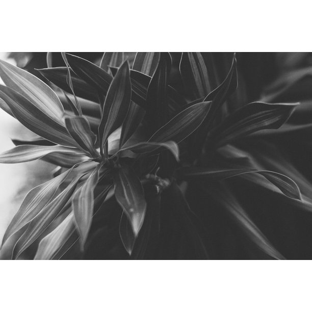 framed art for your wall blade the shape nature black and white mo plant 10x13 frame walmart com walmart com walmart com