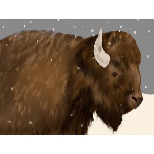 Oopsy Daisy - Bridget Bison Canvas Wall Art 24x18, Meghann O'Hara