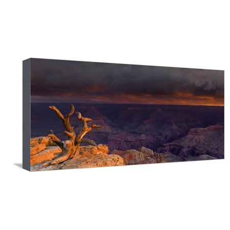First Light Illuminates an Old Gnarled Tree Embedded in Rocks with Views of Grand Canyon Below Stretched Canvas Print Wall Art By Garry Ridsdale