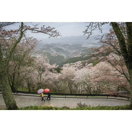 Yoshino Cherry - Canvas Print Nara Prefecture Japan Wild Cherry Landscape Yoshino Stretched Canvas 10 x 14