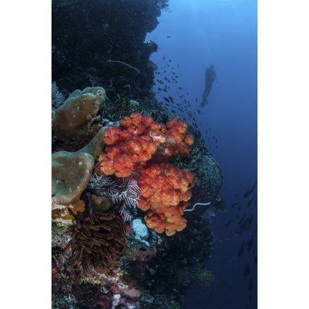 - A beautiful soft coral colony grows on a reef wall in Indonesia Canvas Art - Ethan DanielsStocktrek Images (12 x 17)