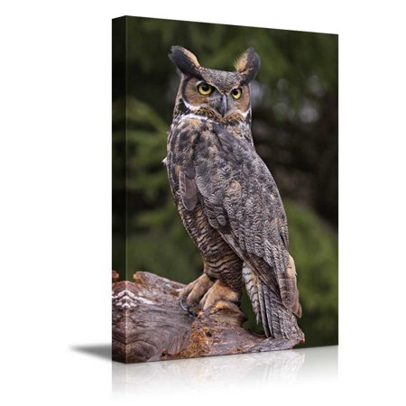 Canvas Prints Wall Art - a Great Horned Owl Sitting on a Tree Stump   Modern Wall Decor/Home Decoration Stretched Gallery Canvas Wrap Giclee Print & Ready to Hang - 24