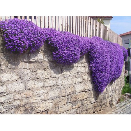 - Creeping Thyme Pre-Seeded Flower Mat