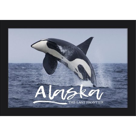 Alaska - Orca Jumping - Lantern Press Photography (18x12 Giclee Art Print, Gallery Framed, Black Wood)