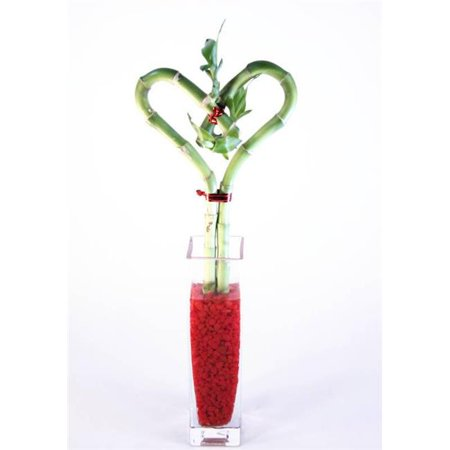 Athena Single (Athenas Garden BA-HS08-CG001-RRSM 10 in. Single Heart Bamboo - Glass Block Bud Vase )