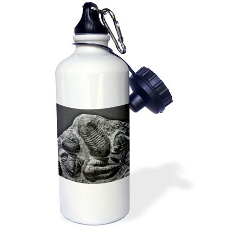 3dRose Phacopidae trilobites from the devonic in Morrocco, Sports Water Bottle, 21oz