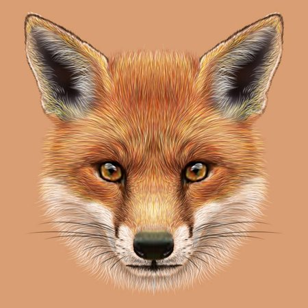 Illustrative Portrait of a Red Fox. the Cute Fluffy Face of Forest Fox. Print Wall Art By ant_art19