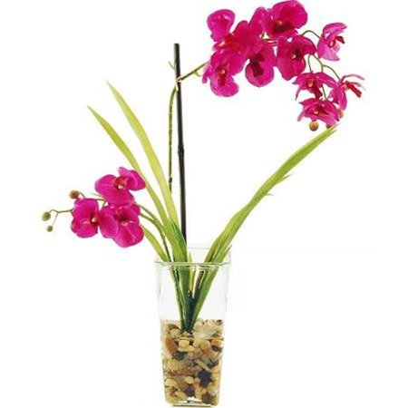 22 In Phalaenopsis Orchids Tied To A Bamboo Stake In A Glass Vase