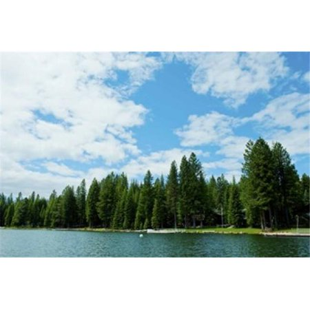 Panoramic Images Ppi142496 Trees Along Bank Of Lake Almanor  California  Usa Poster Print By Panoramic Images   36 X 24