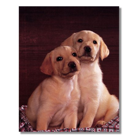 Labrador Puppies Puppy Dog Wall Picture Art (Black Labrador Dog Pictures)