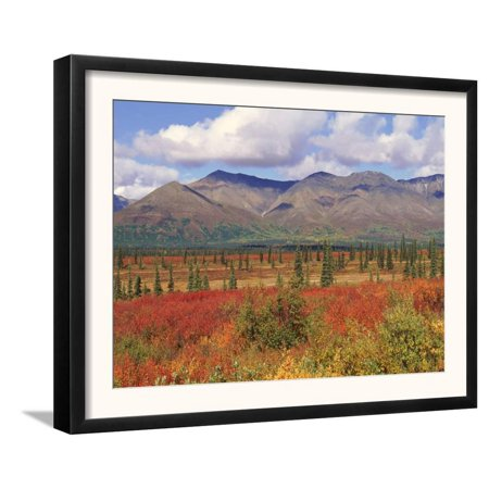 Tundra Landscape in Autumn, Denali National Park, Alaska USA Framed Art Print Wall Art