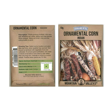 Ornamental Indian Corn Garden Seeds - 10 Gram Packet- Non-GMO, Heirloom, Open Pollinated Vegetable Gardening Seeds - Decorative